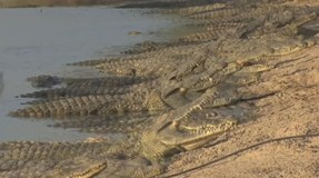 "Crocodilos na fronteira israelita ameaçam ""incidente internacional"""