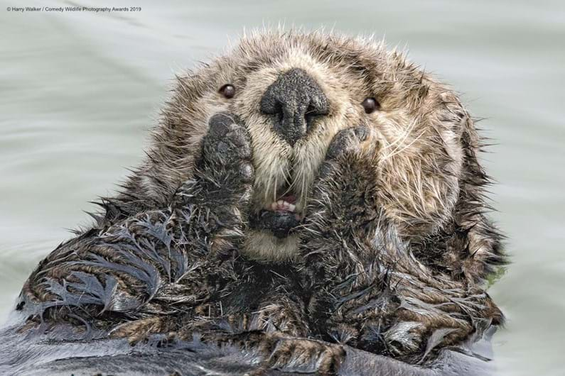 Revelada a fotografia vencedora do Comedy Wildlife Awards 2019
